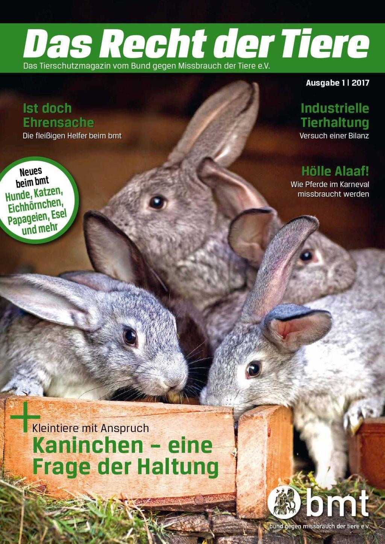 haltung foxterrier welpen